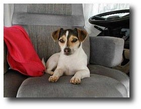 RV Travel with Pets