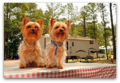 RVing with Pets