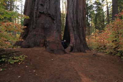 These are some really big trees!